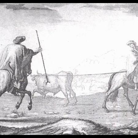 Allacciamento del bestiame nelle campagne di Buenos Aires