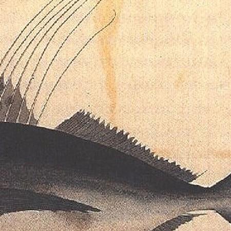 Specie di Zeus o Pesce gallo giovane di Acapulco (Nematistius pectoralis)