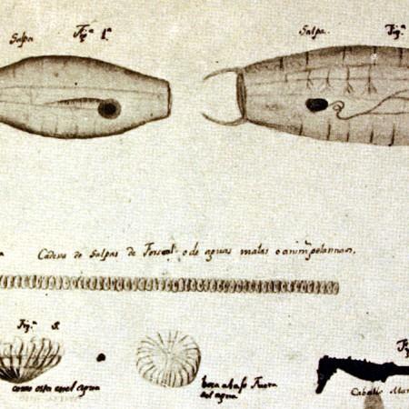 Meduse e cavalluccio marino